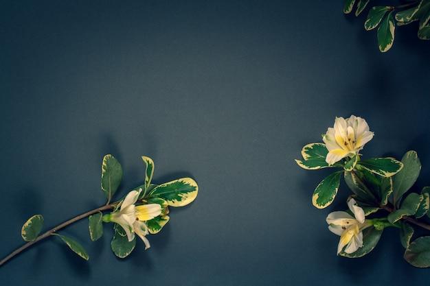 Минималистичная плоская планировка. веточки с цветами и листьями на синем фоне. скопируйте пространство слева. виньетирование.