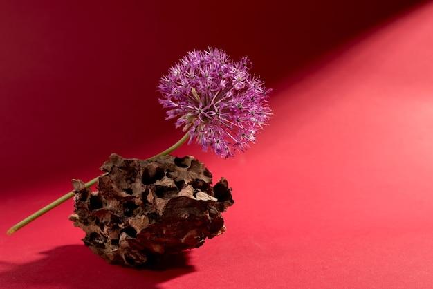 真っ赤な背景に木の樹皮に紫色のネギとミニマリストの花の静物。花のテーマのバナーにネギまたはジャイアントタマネギの装飾的な植物。