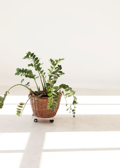 Minimalist home plant with and window shadows