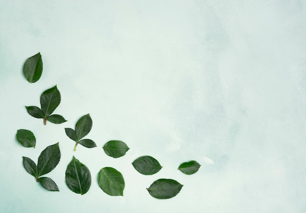 Minimalist leaves with copy space