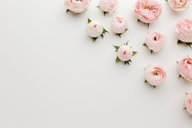 Minimalist pink and white roses and copy space background