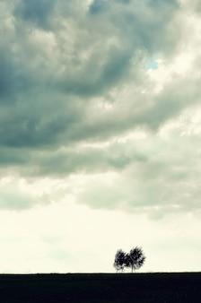 Minimalist single tree silhouette.