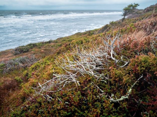 Минималистичный осенний пейзаж с кустами лесных ягод на берегу северного моря