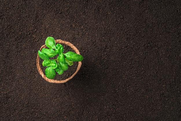 土の上の鍋にバジルの植物とミニマルな背景。コピースペースのある上面図。