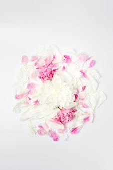 Minimalistic bright flower composition. white and pink peony flowers and petals scattered on white surface, top view flat lay.