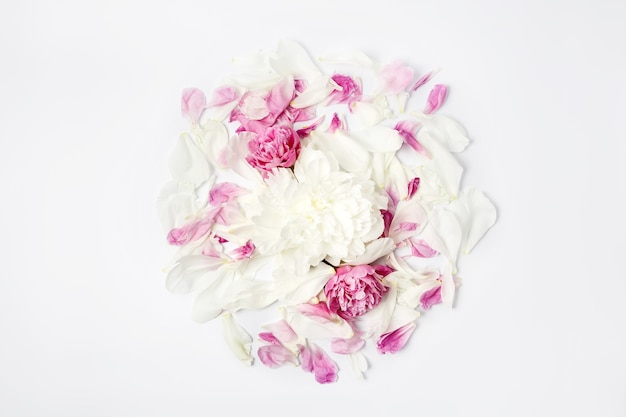 Minimalistic bright flower composition. white and pink peony flowers and petals scattered on white