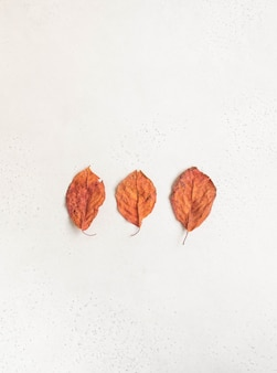 Minimalistic composition of three red autumn leaves of imperfect shape on a white textured background. top view. copy space
