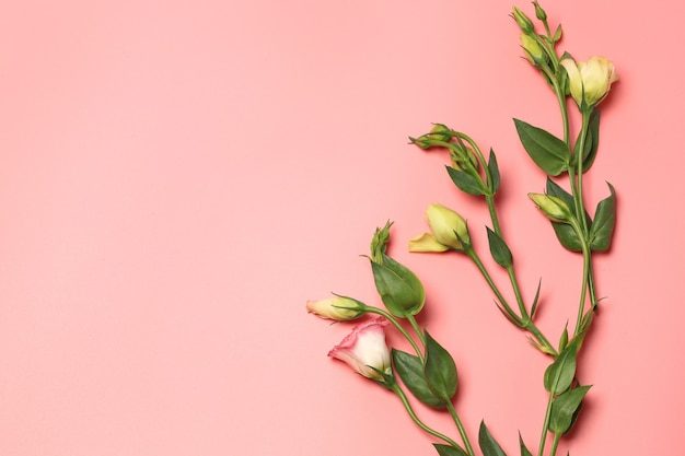 Minimalistic concept of delicate flowers on a pink background