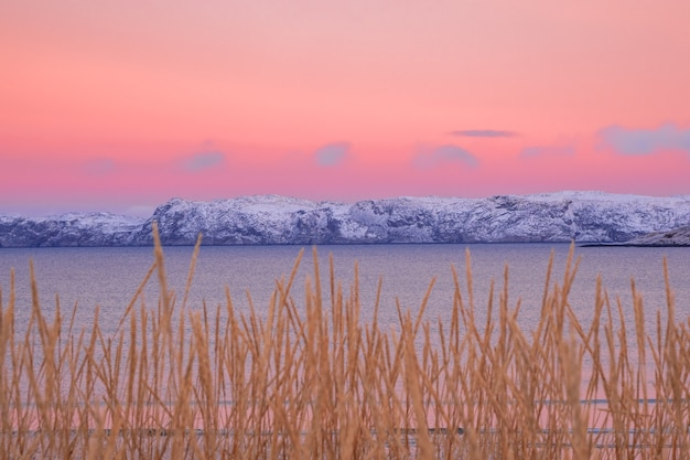 A minimalistic northern landscape with arctic hills on the horizon and blurred sparse vegetation against a bright pink sky.