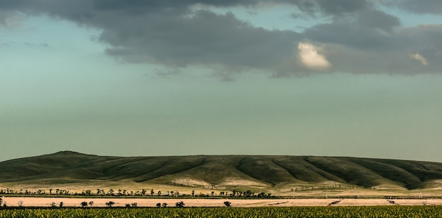 ミニマルなパノラマ風景。森の帯で区切られた緑の丘のふもとにあるひまわりの長い畑