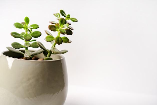 分離された白い鉢のミニマルな植物