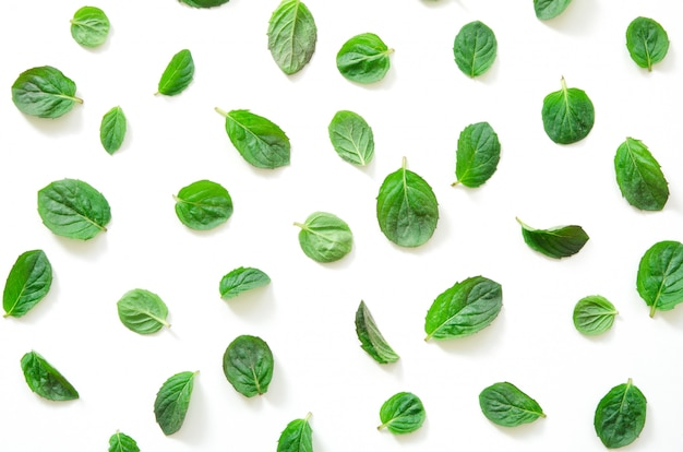 Mint herbs pattern on white background