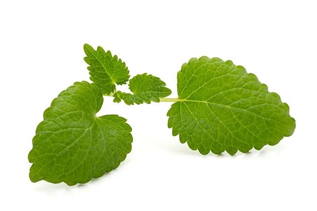 ミントの葉は白い背景にクローズアップ。