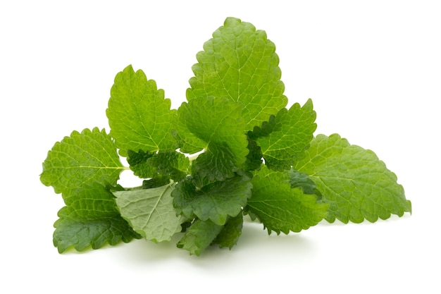 Mint leaf close up on a white background.