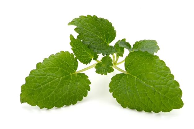 Mint leaf close up on a white surface.