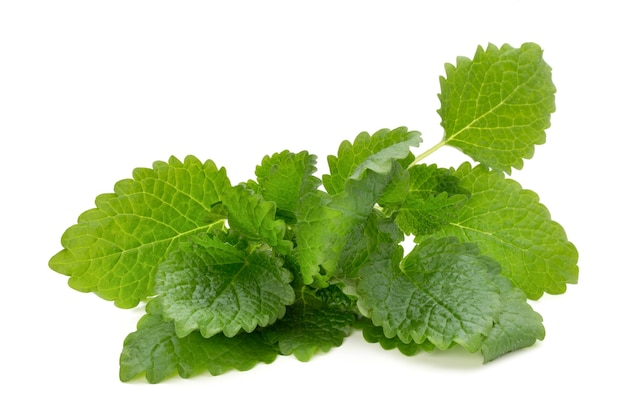 Mint leaf close up on a white