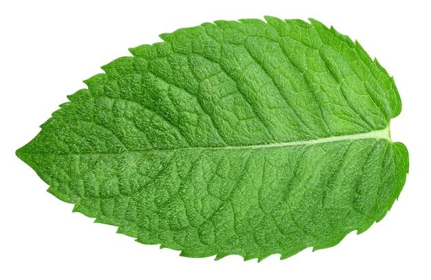 Листья мяты, изолированные на белом фоне. путь отсечения монетного двора. фотография еды