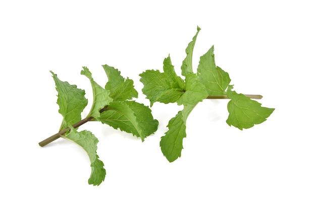 민트 잎에 고립 된 흰색 배경.