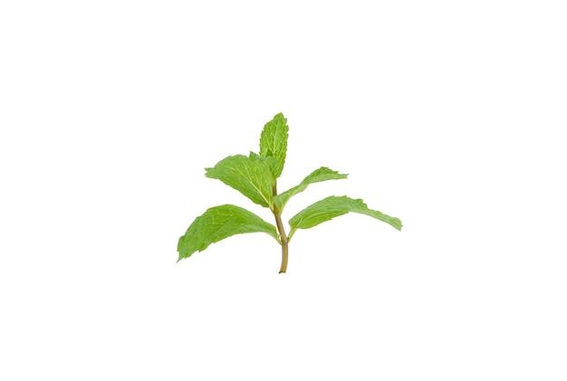 白い背景で隔離のミントの葉