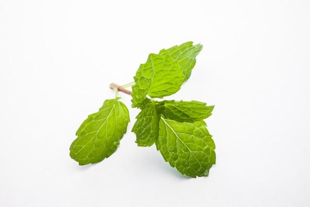ミントの葉は白い背景で隔離