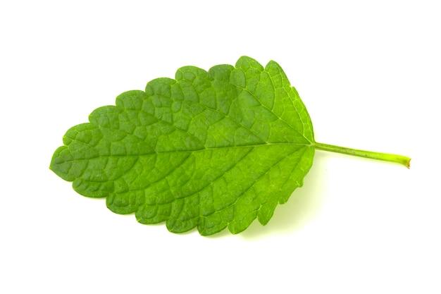 민트 잎 흰색 절연입니다. 민트 클리핑 패스. 민트 매크로 스튜디오 사진입니다.