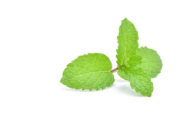 민트 잎 흰색 절연입니다.
