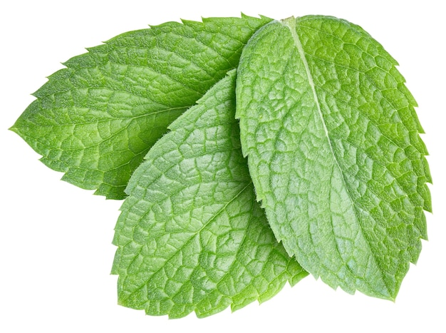 Mint leaves isolated on white with clipping path