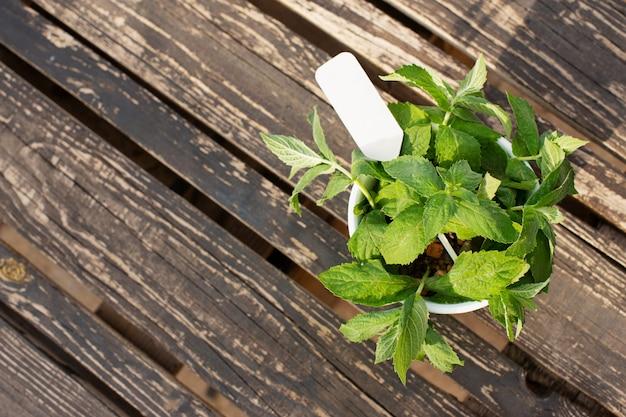 민트는 어두운 나무 판에 나뭇잎. 신선한 향기로운 허브. 비문이있는 접시. 공간 복사