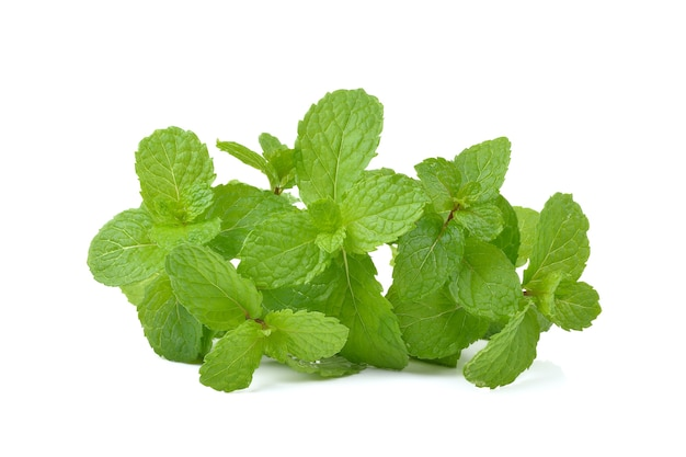Mint  leaves  on white background