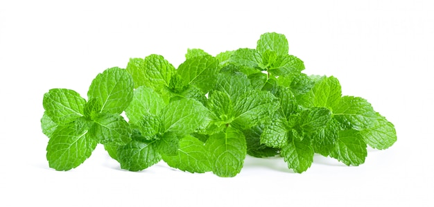 Mint leaves on white wall.