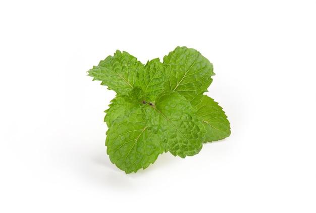 민트 또는 멜리사 officinalis 분기 녹색 잎 흰색 표면에 격리.