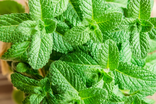 Mint and tag. selective focus. food nature.