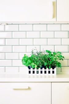 ミント、タイム、バジル、パセリ - 白いキッチンテーブル、レンガタイルの背景に芳香族有機ハーブ。鉢植えの料理用スパイス植物。ミニマルなライフスタイルのコンセプトです。