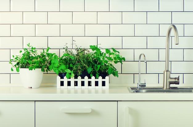 ミント、タイム、バジル、パセリ - 白いキッチンテーブル、レンガタイルの背景に芳香族有機ハーブ。鉢植えの料理用スパイス植物。