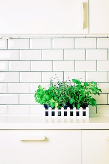 Mint, thyme, basil, parsley - aromatic organic herbs on white kitchen table, brick tile background. potted culinary spice plants. minimalistic lifestyle concept.