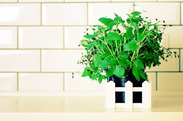 Mint, thyme, basil, parsley - aromatic organic herbs on white kitchen table, brick tile background. potted culinary spice plants.