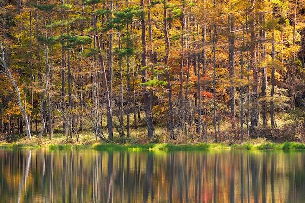 秋のmishaka池。長野県茅野市にある
