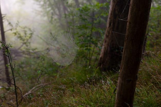 スロベニアの森の霧