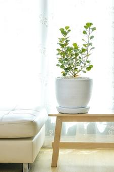 ヤドリギゴムノキは家の中に植えることができる観賞用の木です