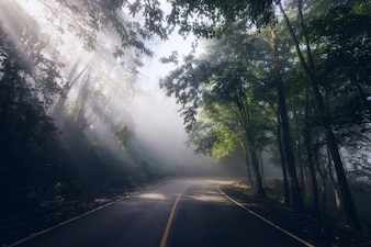 Misty and Rays through road