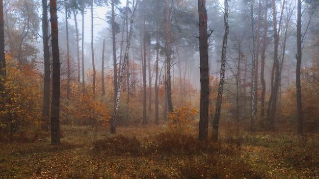 Туманный осенний лиственный лес. панорамный вид