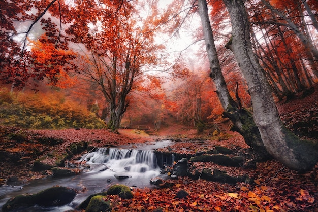 Misty autumn forest landscape with stream, red foliage, stones with moss in blurred water