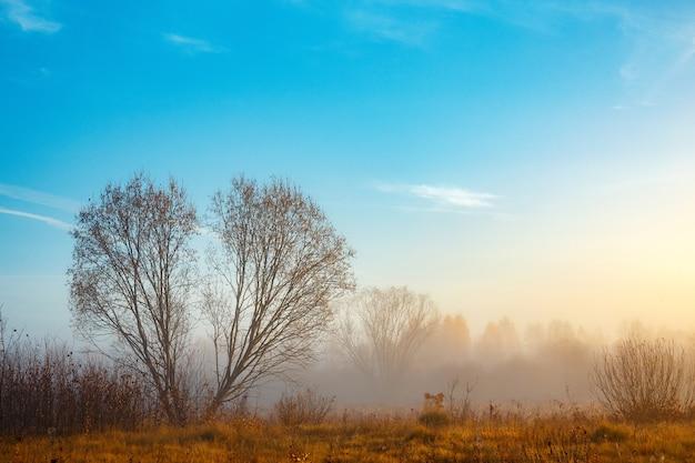 시골의 안개가 자욱한 가을 아침, 심장 모양의 잎이없는 하나의 큰 나무, 시골의 풍경