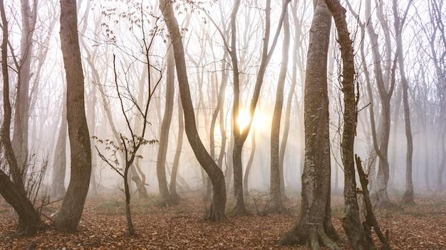 Туманный осенний лес