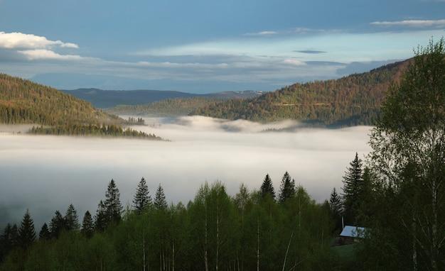 ウクライナの早朝の日の出の霧のカルパチアの森の山々
