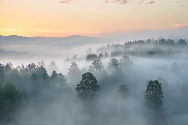 Туманный рассвет в национальном парке оленьих ручьев