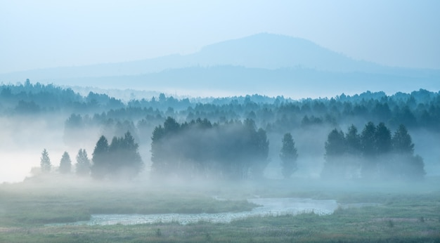 Misty dawn on the river, forest hiding in the fog