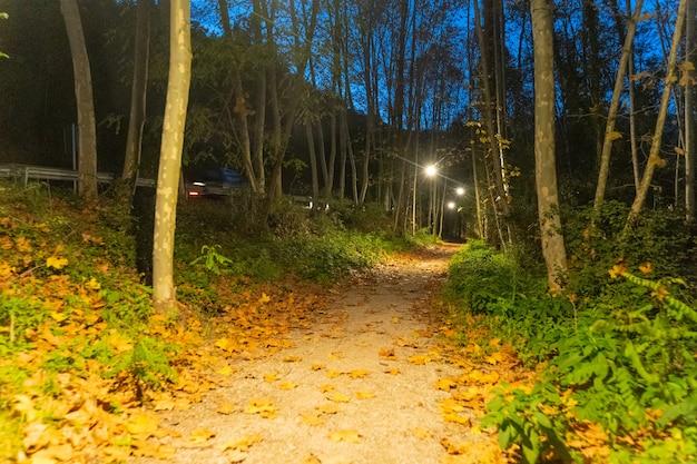 극적인 신비한 장면에서 안개가 자욱한 숲길 밤에 나무의 실루엣
