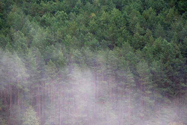 松林の朝の霧のかかった朝。霧の日の森の高架ビュー。