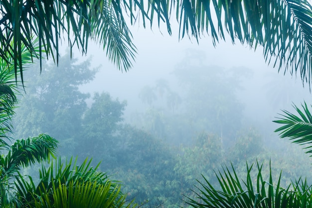 Misty forest landscape view in nature leaves frame